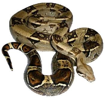 Uma das cobras é da espécie mais comum e a outra é uma arco-íris. O roubo ocorreu nesta quinta-feira (29) da casa onde ficam as jiboias e algumas espécies peçonhentas